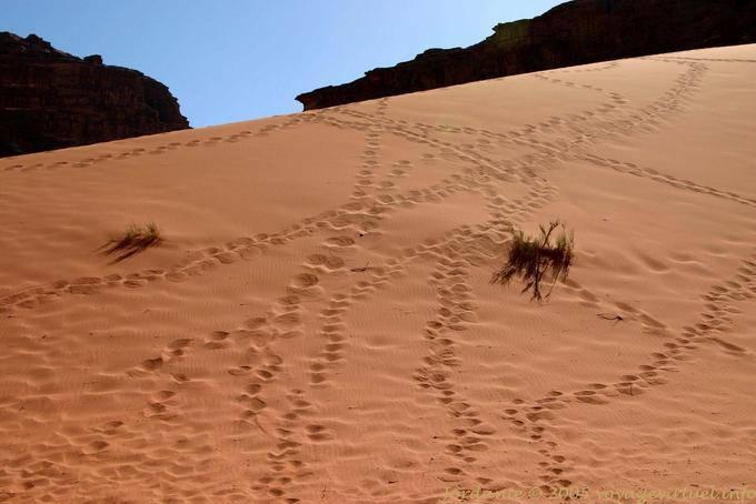 Wadi Rum 650