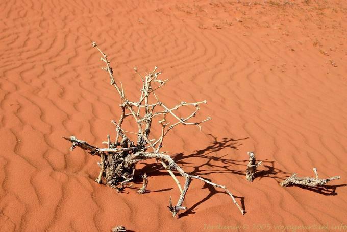 Wadi Rum 729