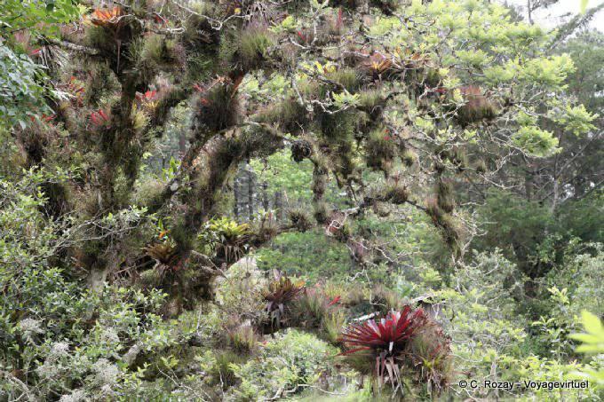 Lagunas De Montebello Epiphytes 1
