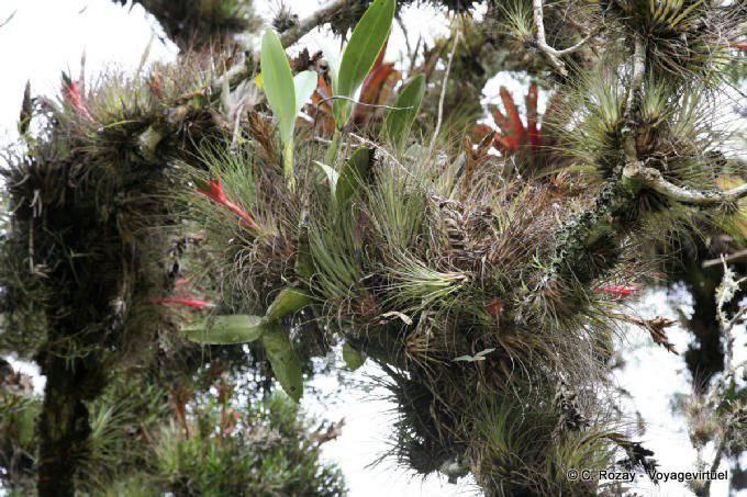Lagunas De Montebello Epiphytes 3