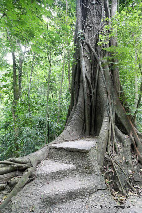 Palenque Arbres 4