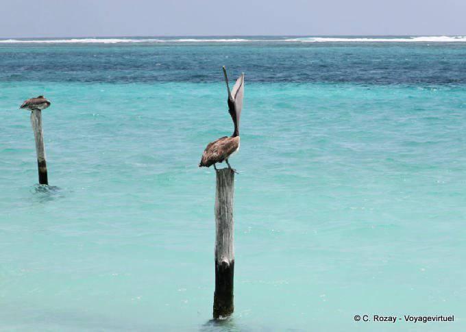 Puerto Morelos Eveil Pelicanesque 26