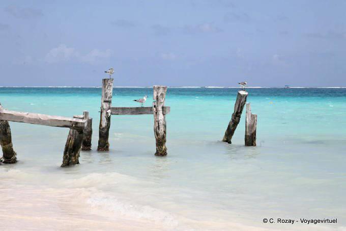 Puerto Morelos Oiseaux Sur Ponton Brise 6