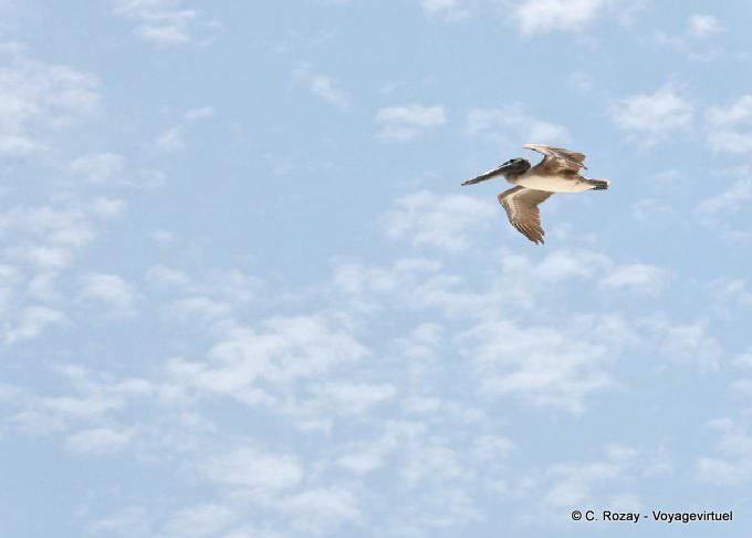 Puerto Morelos Vol Du Pelican 30