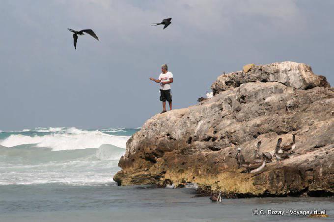 Tulum Pecheur Fregates Et Pelicans 20