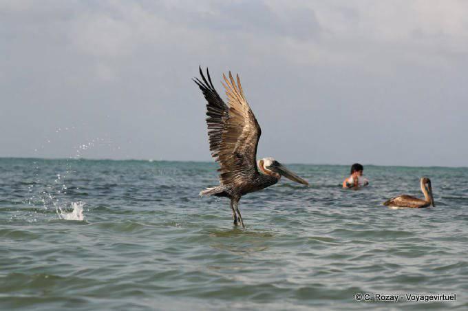 Tulum Sian Kaan Decollage Du Pelicanos 11