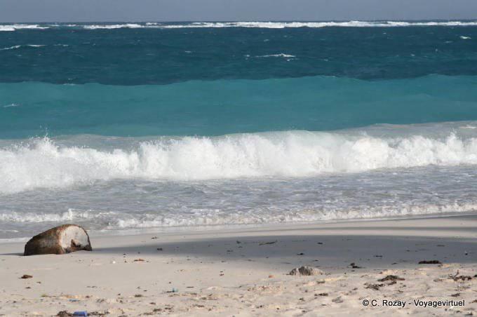 Tulum Site Plage Deserte 6