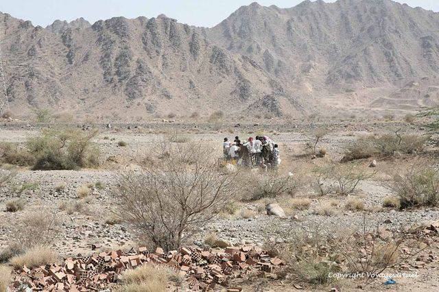 Tihama Khokhah 3024